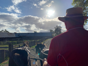 Horse and cart rides at the Jondaryan Woolshed